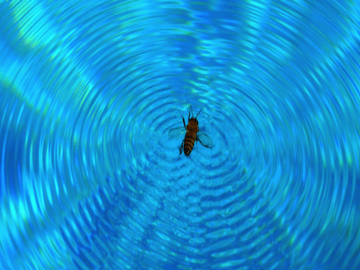 Bees! Keep Them Away From Your Pool This Summer